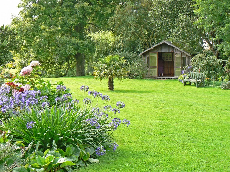 Как посадить газон на даче